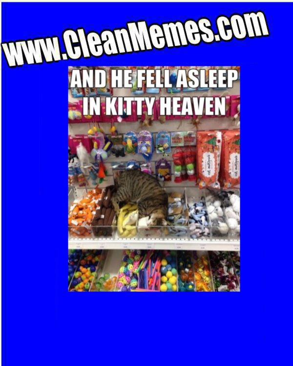 KittenHeaven