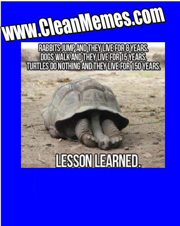 TurtleLessons