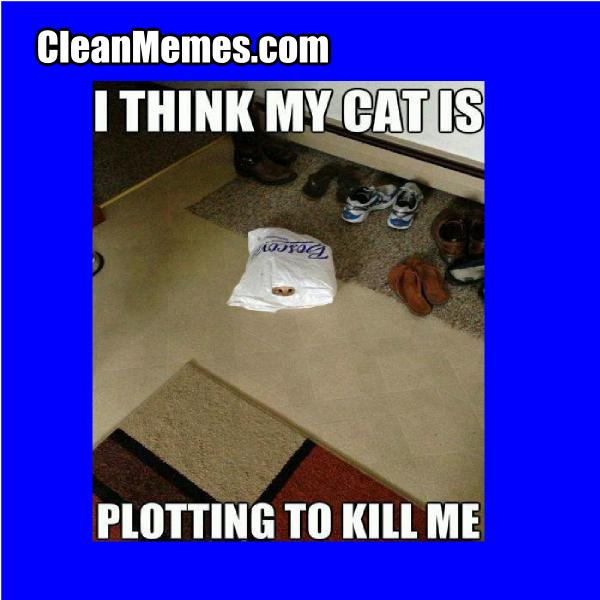 CatStalker