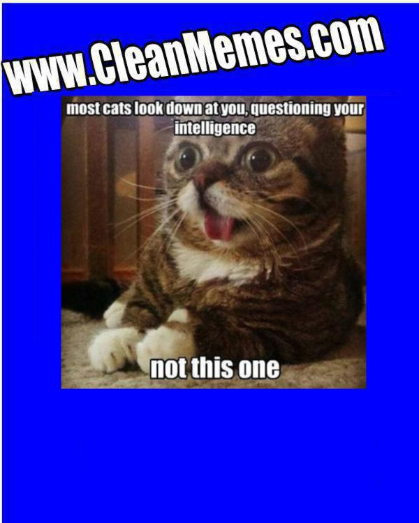 how to clean cat& 39