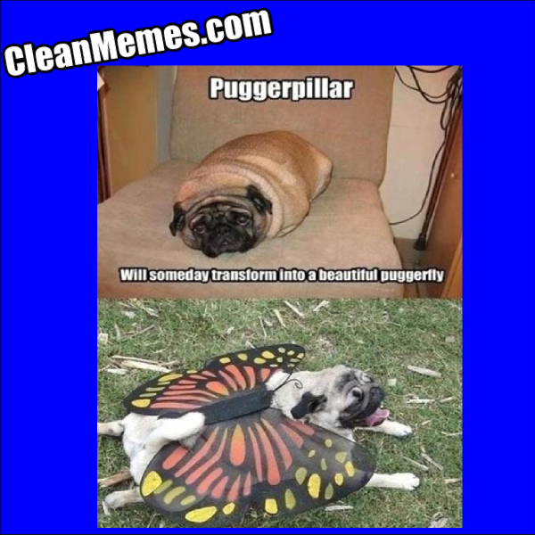 PuggerFly