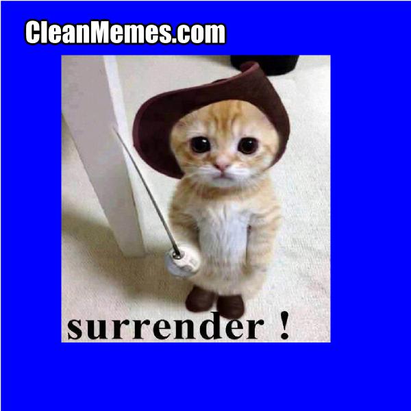 SurrenderCat