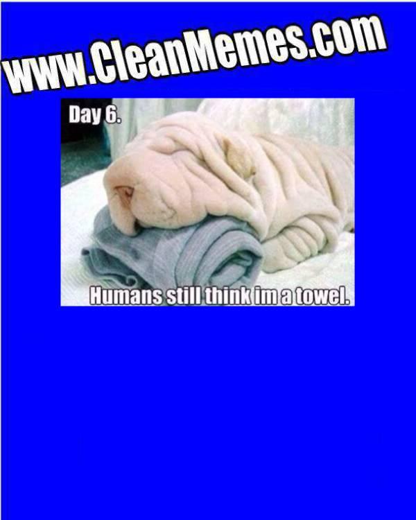 TowelDog