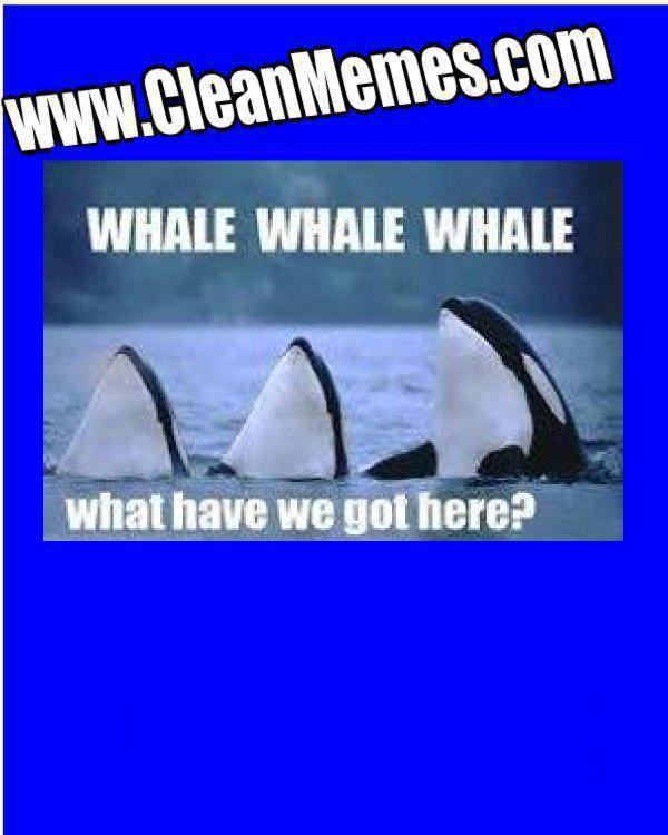 WhaleWhale