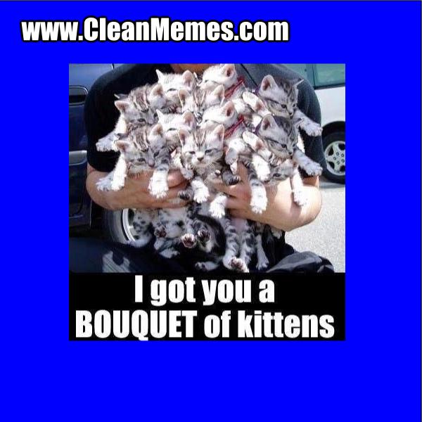 BouquetOfKittens