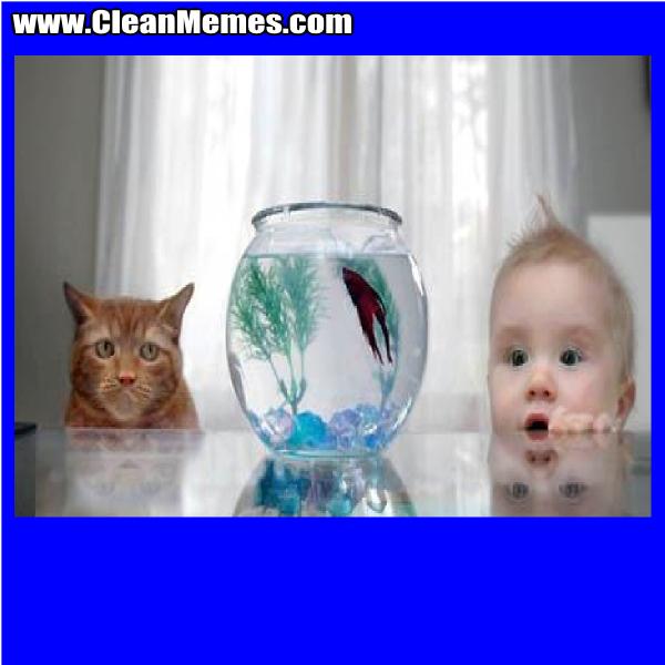 CatBabyFish