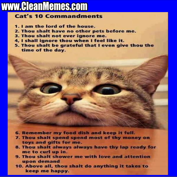 Cats10Commandments