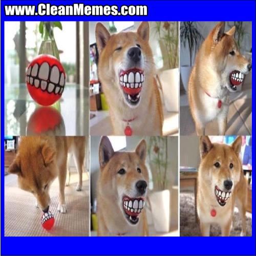 DogSmilingBall