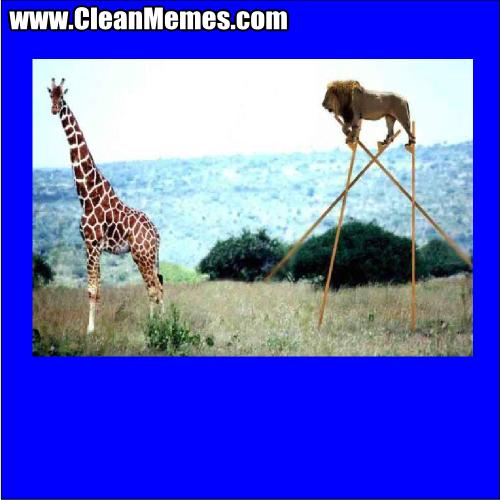 LionGiraffeStilts