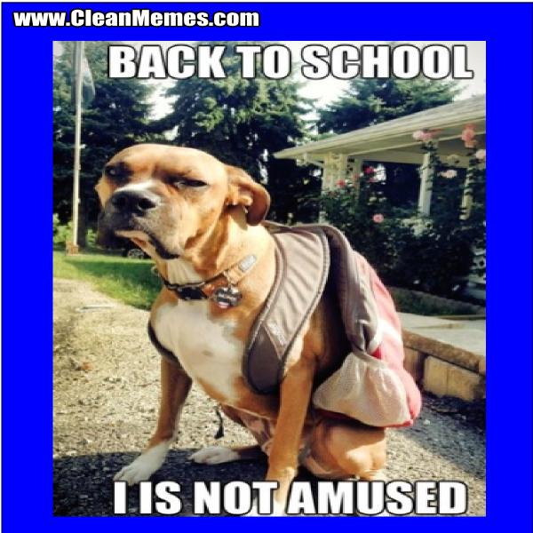 BackToSchoolDog