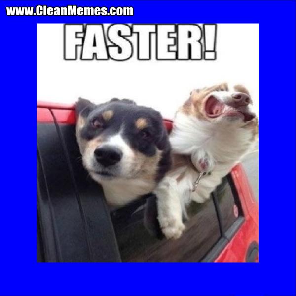 FasterDogs
