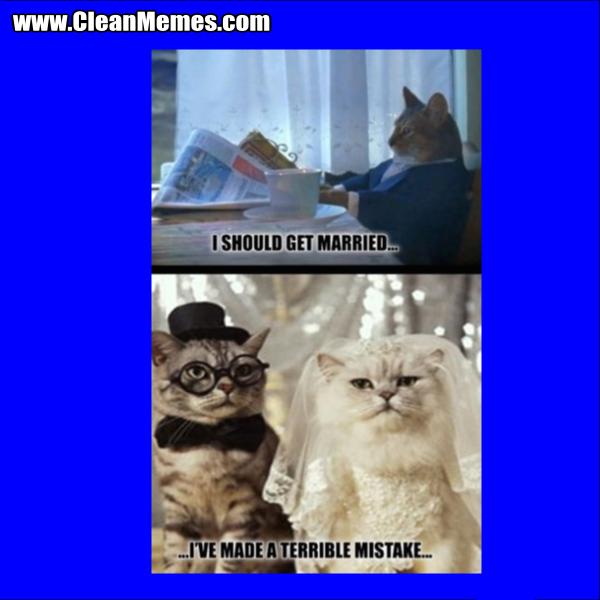 I Should Get Married Cat \u2013 Clean Memes