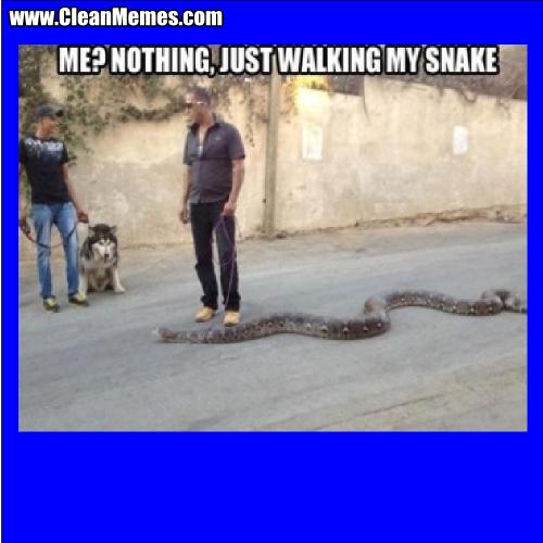Just Walking My Snake Clean Memes