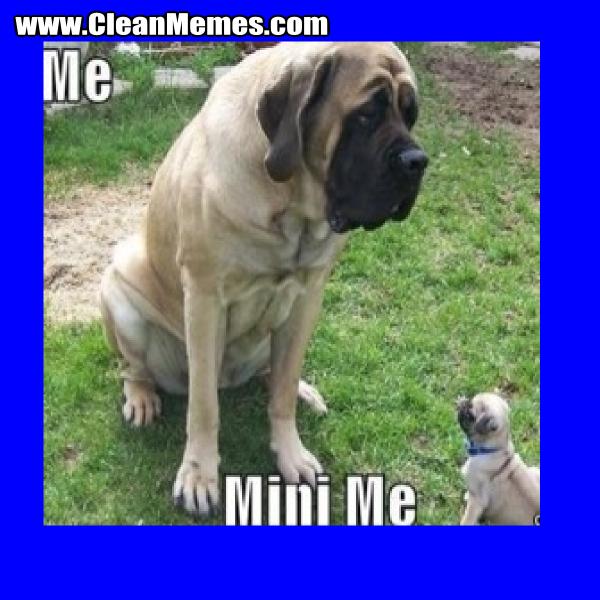 MiniMeDog