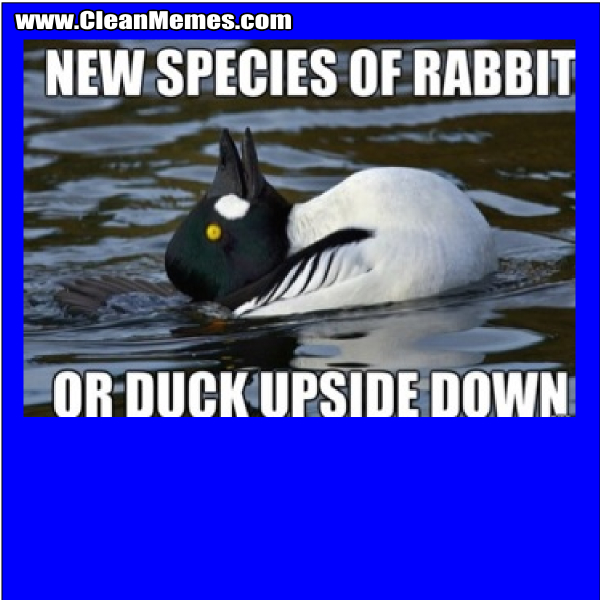 NewSpeciesOfRabbit