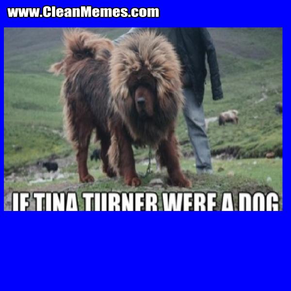 TinaTurnerWereADog
