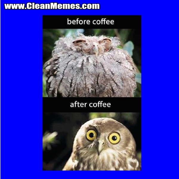 AfterCoffeeOwl