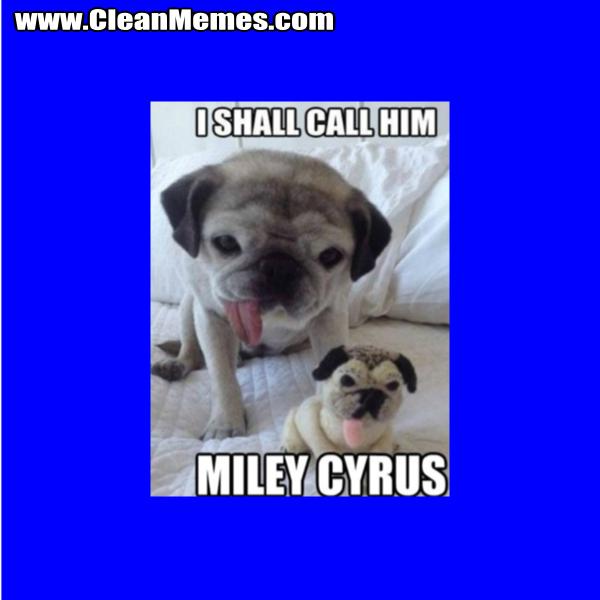 IShallCallHimMileyCyrus