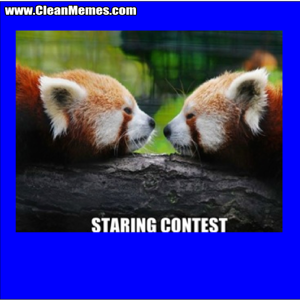 StaringContest