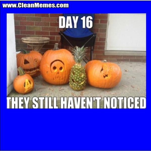 TheyStillHaventNoticedPumpkins
