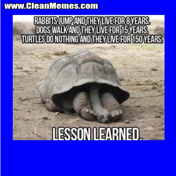 TurtlesDoNothing
