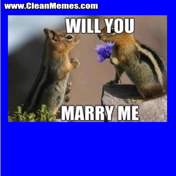 WillYouMarryMeSquirrel