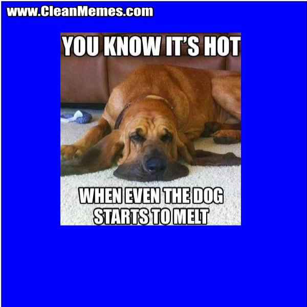 DogStartsToMelt