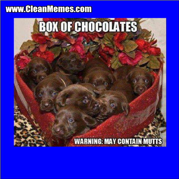 MayContainMutts
