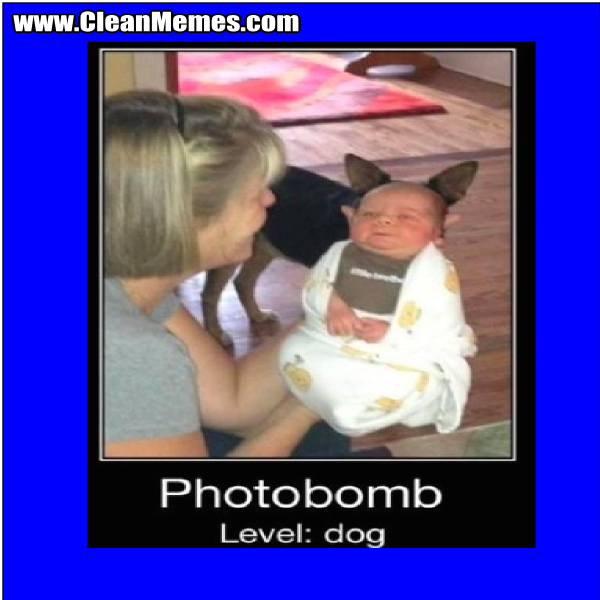 PhotobombLevelDog