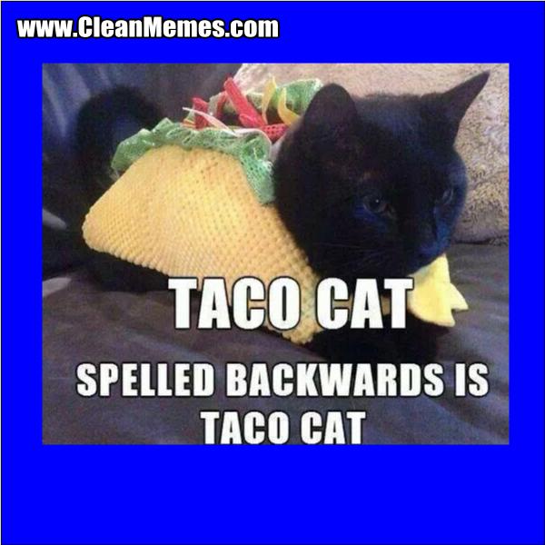 Taco Cat - Clean Memes