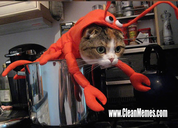 39LobsterCat