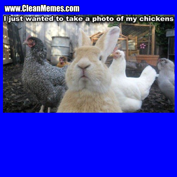 13PhotoOfMyChickens