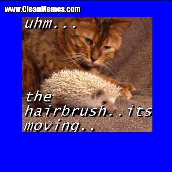 22TheHairbrush