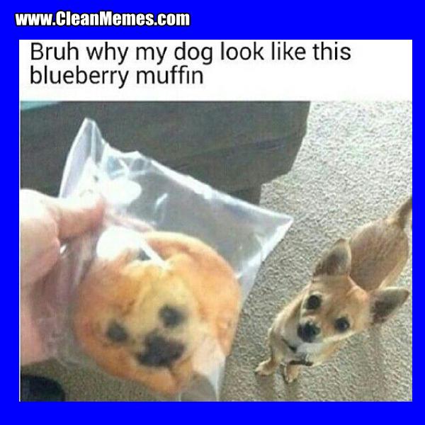 23BlueberryMuffin