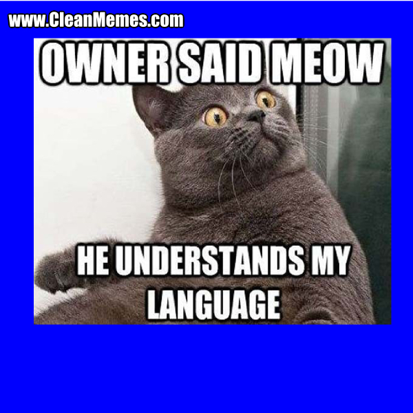 8OwnerSaidMeow