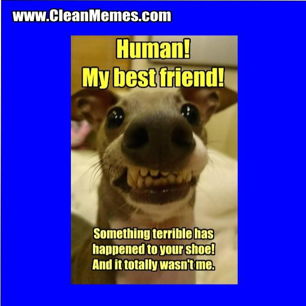 Best Friend Dog Memes