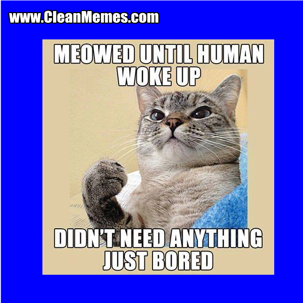 funny memes clean