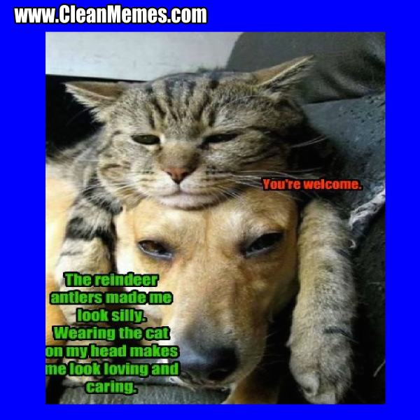 Yoda's New Cat by chillinjohnson - Meme Center