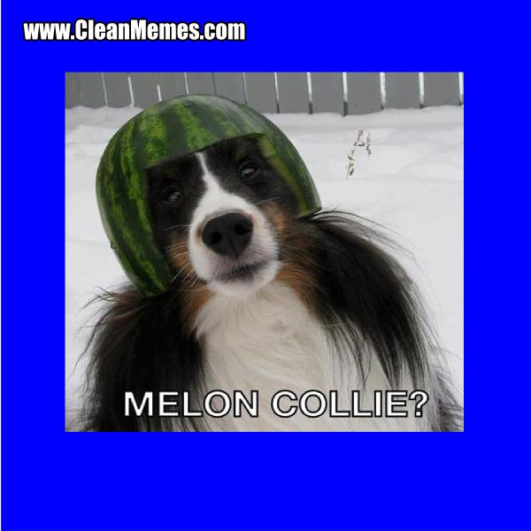 8MelonCollie