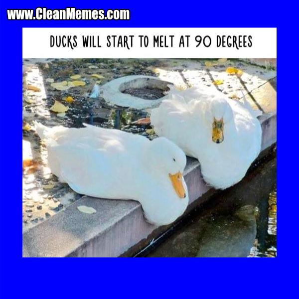 Ducks Melt Clean Memes