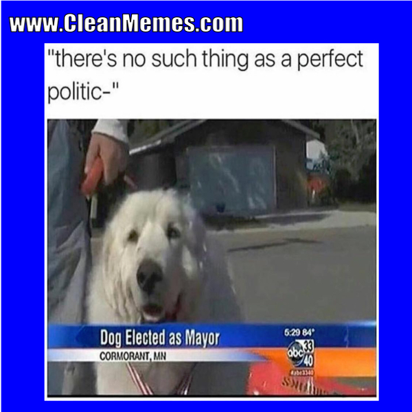 45perfectpolitic