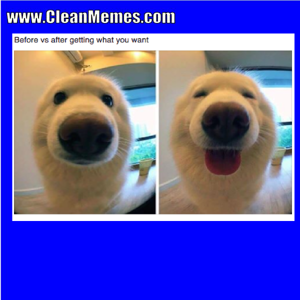 how to clean a dog
