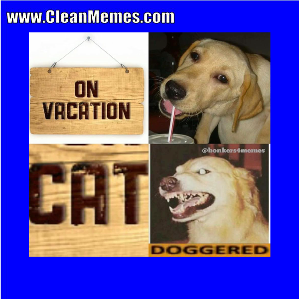 2017 Format ImageCategories Clean Funny Images Memes Dog MemesTags MemesLeave A Comment On Vacation