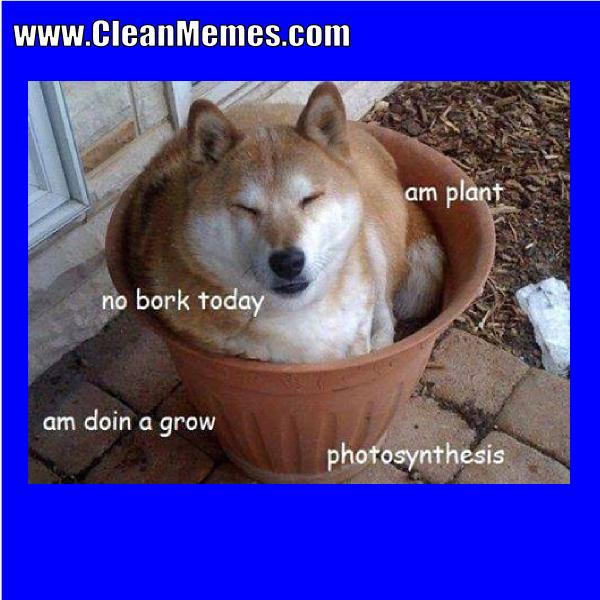 Am Plant Clean Memes