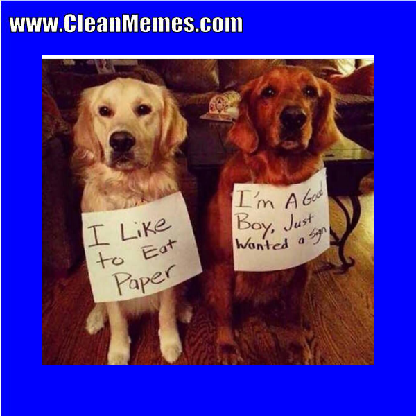 Funny clean dog memes - photo#29