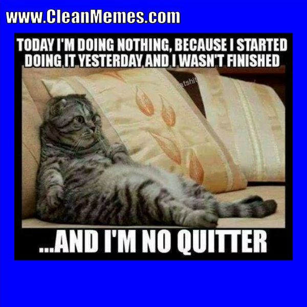 Author Cleanmemesposted On August 13 2017 Categories Cat Memes Clean Funny Images Clean Memes Dog Memestags Cat Memes Clean Funny Images Clean Memes