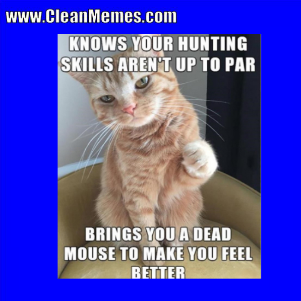 Author Cleanmemesposted On January 2 2018 Categories Cat Memes Clean Funny Images Clean Memestags Cat Memes Clean Funny Imagesleave A Comment On Clean