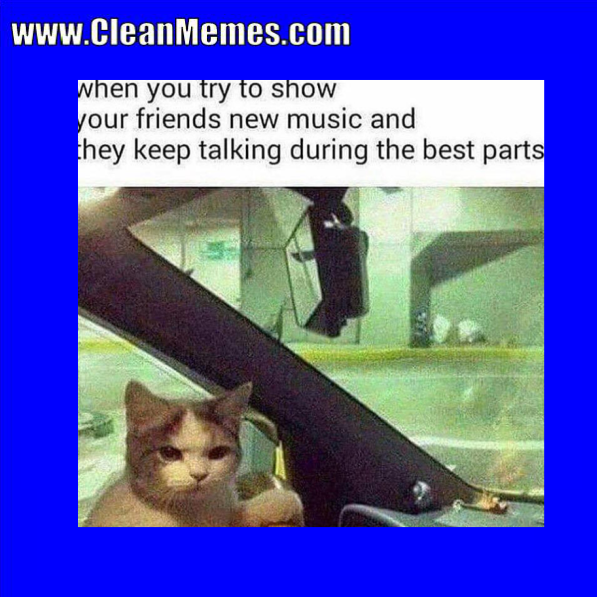 New Funny Cat Videos