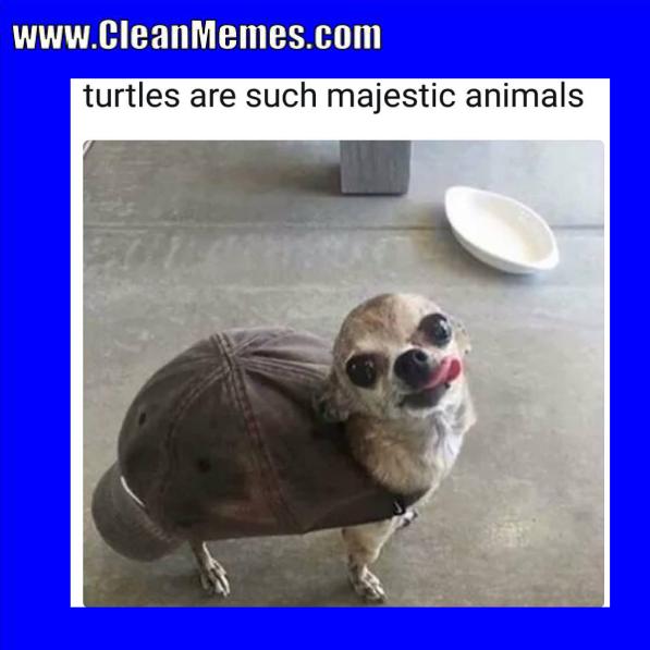 Clean Memes 04-08-2018 - Clean Memes
