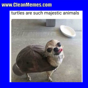 Author Cleanmemesposted On April 8  2018 Categories Clean Funny Images Clean Memes Dog Memestags Clean Funny Images Dog Memesleave A